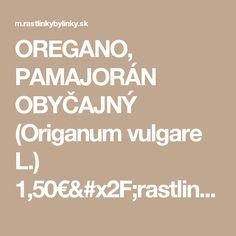 OREGANO, PAMAJORÁN OBYČAJNÝ  (Origanum vulgare L.)  1,50€/rastlinka :: RASTLINKY BYLINKY