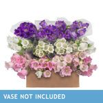 Assorted Campanula - 20 Bunches, 100 Stems 89.99