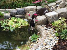 The garden pond 7
