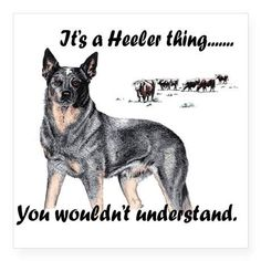 It's a heeler thing... You wouldn't understand