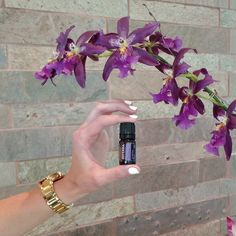 Everyone has secret sorrows. doTERRA Console Comforting Blend of floral and tree essential oils will help you close the door on sadness and take your first steps on a hopeful path toward emotional healing.