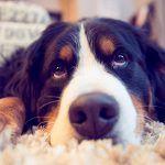 """Vous cherchez une solution simple, économique et efficace pour garder aussi bien vos animaux domestiques que votre maison ? Découvrez sans plus attendre """"Dom'Sitting"""", une société de gardiennage qui va vous faire gagner beaucoup de temps !"""