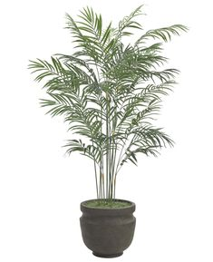 Palm (T63-6): Areca Palm, Shown in container option A,Potter's Jar Old Iron, 44wx6'h