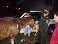 """Noticias de Cúcuta: La Policía Nacional rescata a """"Cantinero"""" un cabal..."""