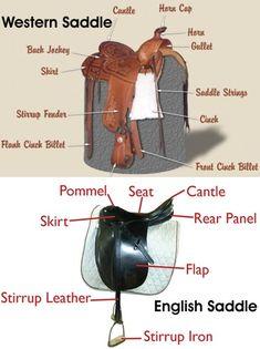 western saddle diagram western saddle parts diagram horse rh pinterest com Western Saddle Replacement Parts Western Saddle Pads