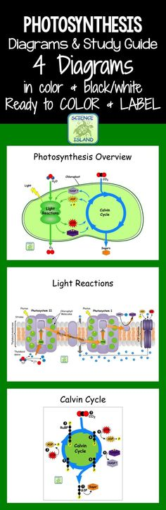 Great photosynthesis diagrams for Biology are ready to color and/or label. Study Guide and Color Answer Key included!