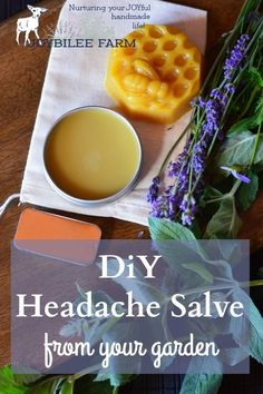 This soothing headache salve can be made from fresh lavender blossoms and…