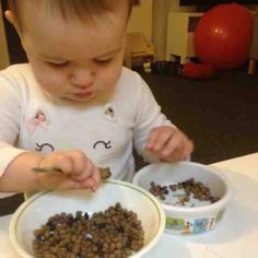 Montessori activity for 13 month old toddler, scooping, transferring, care of animals, work with meaning, fine motor skills, concentration activities