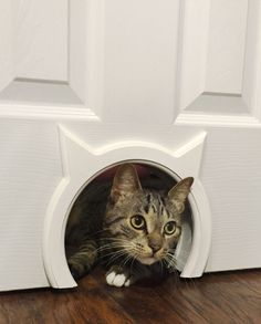 """A """"Kitty Pass"""" pet door that lets your feline friends travel freely between rooms. 
