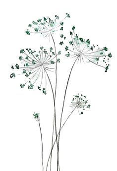 wild carrot watercolor Shower Curtain by colorandcolor Watercolor Art Lessons, Watercolor Paintings, Tatoo Dog, Watercolor Shower Curtain, Watercolor Flowers, Flower Art, Painting & Drawing, Art Projects, Art Drawings