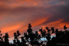 Reposting @luagme: Todos vivimos bajo el mismo cielo, pero ninguno tiene el mismo horizonte . . #atardeceres #sunsets #paisajes #landscape #lascosasquemegustan #naturaleza #nature #instanature #naturelovers #natureadicts #nature_perfection #natureloveforlife #naturalezaviva #hobbyphotographer #amateurphoto #fotofanatics #worldphoto #newphotografer #picoftheday #photoaventurero