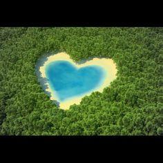 Cœur de forêt