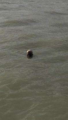 Zombie found floating in Lake Michigan | myfox8.com