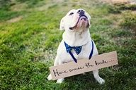 "Dog wearing ""Here comes the bride"" sign... if we can get jasper to do it!!"