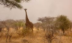 Why a safari in Tanzania is perfect for solo travellers
