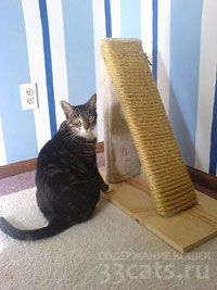 когтедерка для кошек угловая