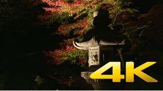 Tokyo Rikugien Garden By Night - 六義園 - 4K Ultra HD