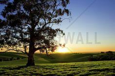Beautiful Sunset Over a Rural Meadow - Wall Mural & Photo Wallpaper - Photowall