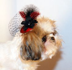 I think we should consider some sort of fascinator for Darwin. She would LOVE that. ;)