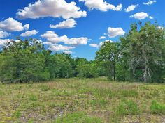 FIVE OAKS ACRES! 5.56 ACRES IN BRONSON FL. MOSTLY CLEARED WITH LARGE SCATTERED OAKS!