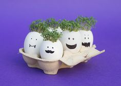 Let's make… cress heads. We love this for an easy indoor growing project. Kids learn the essentials of watering plants and are rewarded with speedy growing cress heads. And a yummy filling for an egg sandwich. Check out how on the Kiddicare Blog