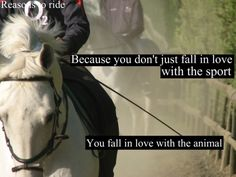 horses are my passion
