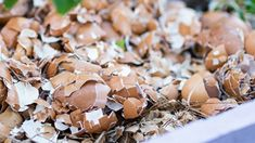 Fungi, Gardening Tips, Flora, Stuffed Mushrooms, Make It Yourself, Vegetables, Decor, Mushrooms, Stuff Mushrooms