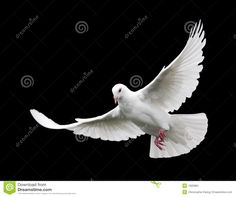 White Dove In Flight 6 - Download From Over 29 Million High Quality Stock Photos, Images, Vectors. Sign up for FREE today. Image: 1585884