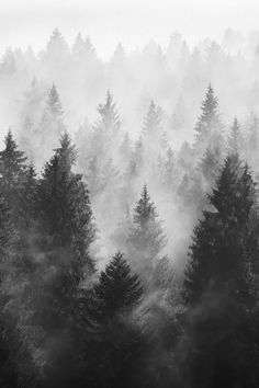 Forest Of Fog Wallpaper Landscape Nature Wallpapers) – Funny Pictures Crazy Snow Photography, Landscape Photography, Winter Nature Photography, Alone Photography, Wildlife Photography, Photography Poses, Trees Tumblr, All Nature, Belle Photo