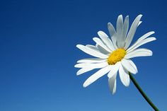 Dvě barvy, které nesmí na Vašich fotkách chybět | Josef Cvrček Plants, Pictures, Plant, Planets