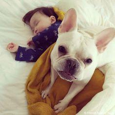 3時のおやつタイム♥️ #frenchbulldog #frenchie #dog #daughter #babygirl #フレンチブルドッグ #女の子