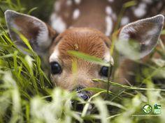Baby Deer Wallpaper Free Desktop 8 HD Wallpapers