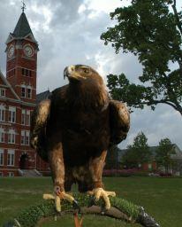 Tiger Auburn Football, Auburn Tigers, College Football, Auburn University, Mississippi State, Alabama, Lion Sculpture, Eagle, War