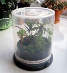 mini greenhouse- good for school, home, or home school. great idea to teach kids about growing plants, or helping adults (like me) that can't keep plants alive.
