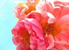 How To Use Flower Symbols for Good Feng Shui in Your Home
