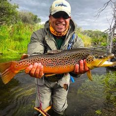 An absolutely gorgeous trophy and one of the most colourful brown I have brought…
