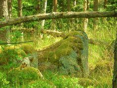 Old Forest. Sweden.