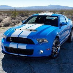 Delightful Ford shelby GT Beautiful Blue!    I love this car!!!!     All it needs is the CIC (me) behind the wheel.... Meooooow!