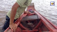 Net Fishing in The River at Kampong Cham Province, Cambodia Traditional ...