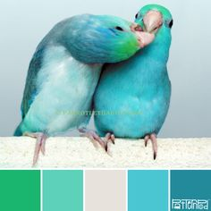turquoise pied parrotlet, how darn sweet are these two Cute Birds, Pretty Birds, Beautiful Birds, Animals Beautiful, Exotic Birds, Colorful Birds, Vogel Gif, Color Combos, Color Schemes