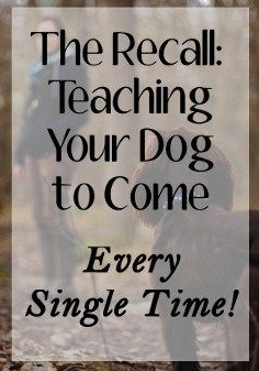 Pupy Training Treats - Puppy Training: Teaching a Puppy to Come - Petlosopher-Puppy training is key to a well-mannered adult. These tips and tricks to teach your puppy to come might save his life some day. - How to train a puppy? Puppy Training Tips, Training Your Dog, Potty Training, Husky Training, Training Quotes, Agility Training, Training Schedule, Training Collar, Brain Training