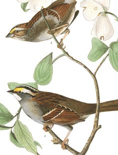 John James Audubon's Birds of America | Audubon
