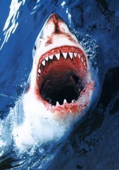 Scary Looking Great White Shark Jaws
