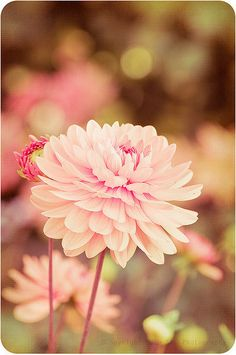 dreamy flower in delicate colors, lomography, pink