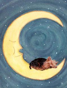 Cute yorkie sleeping on moon via www.Facebook.com/PositivelyBeautiful