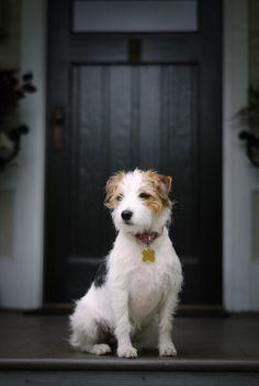 Moja ulubiona rasa psów. Są cudowne...
