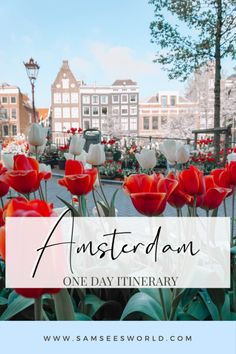 Best things to do in Amsterdam in one day. Find the best of Amsterdam travel here; Red Light District, flowers, food, photography and more! #Amsterdam #Wanderlust
