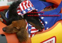 Dachshund Dog Swarovski Crystal Pin you can buy www.elray.us/dachshund.htm