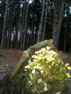 Hilversumse bossen