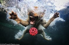 funny dogs in water